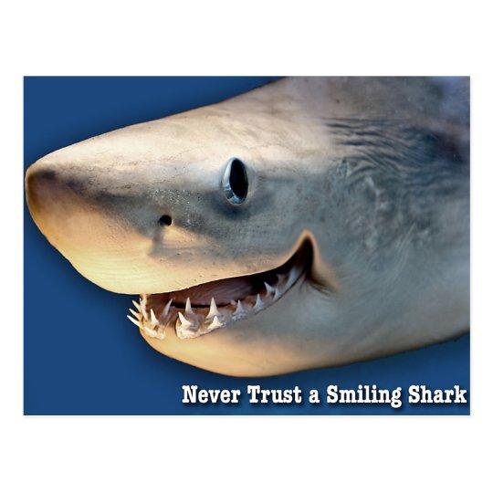 Never Trust a Smiling Shark Postcard