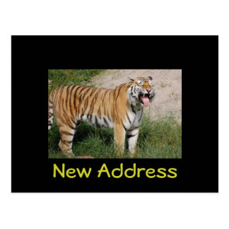 """""""New Address"""" Tiger Postcard"""