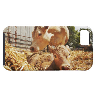 New born calf and mom iPhone 5 case