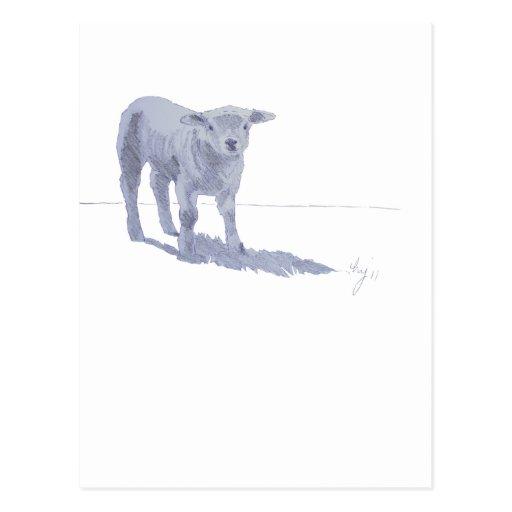 New born lamb pencil sketch postcards