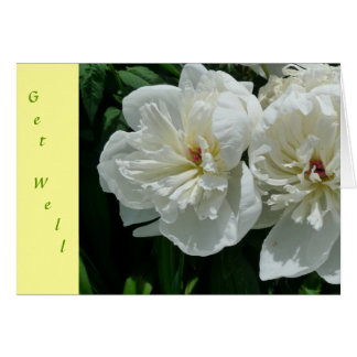 New Day Gardens Get Well Card- White Peony Y Card