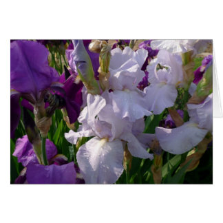 New Day Gardens Notecard-Iris 'Eelanor's Pride' Card