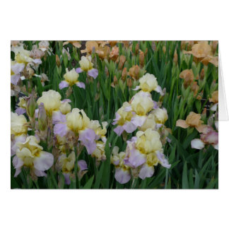 New Day Gardens Notecard- Iris 'Enriched' Card