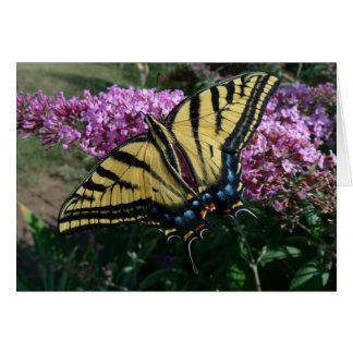 New Day Gardens Notecard- Western Swallowtail Card