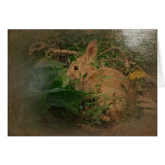 New Day Gardens Notecards- Bunny A Card