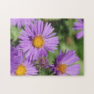 New England Aster Flower Puzzle