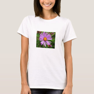 New England Aster Flower Top