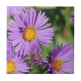 New England Aster Flowers Ceramic Photo Tile