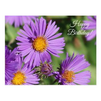 New England Aster Happy Birthday Postcard