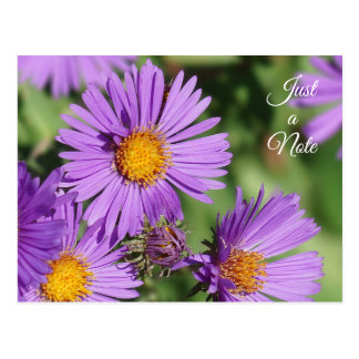 New England Aster Just a Note Postcard