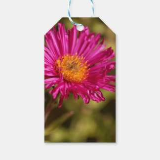New England aster (Symphyotrichum novae angliae) Gift Tags