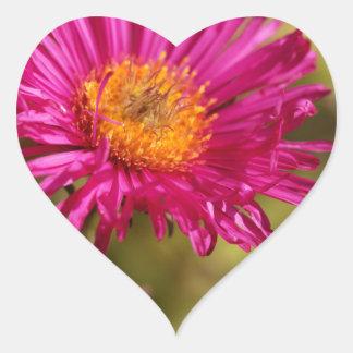 New England aster (Symphyotrichum novae angliae) Heart Sticker