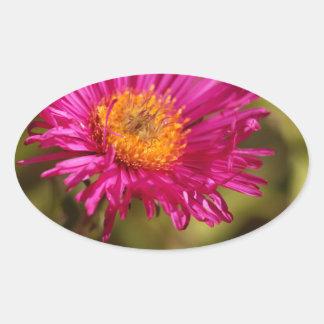 New England aster (Symphyotrichum novae angliae) Oval Sticker
