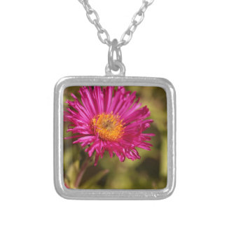 New England aster (Symphyotrichum novae angliae) Silver Plated Necklace