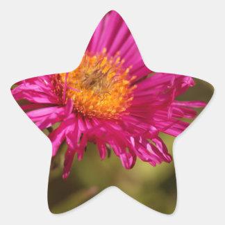 New England aster (Symphyotrichum novae angliae) Star Sticker