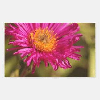New England aster (Symphyotrichum novae angliae) Sticker