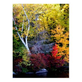 New England Foliage Postcard