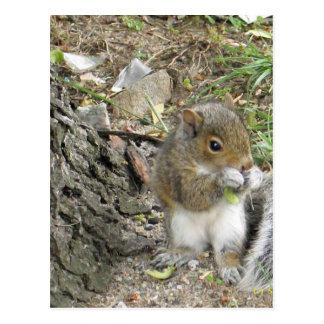 new england squirrel enjoying a tasty snack postcard