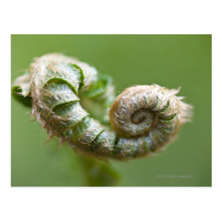 New Fern Branch Postcard