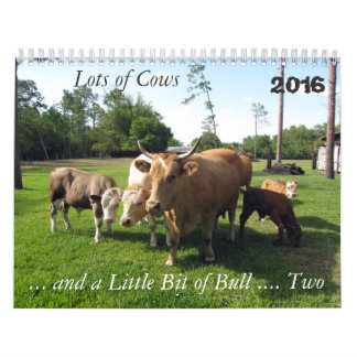 **New For 2016 ** Lots of Cows & a Bit of Bull Too Wall Calendars