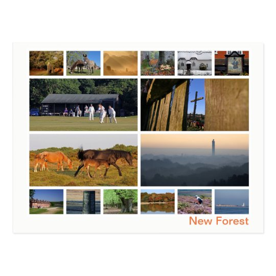 New Forest multi-image Postcard