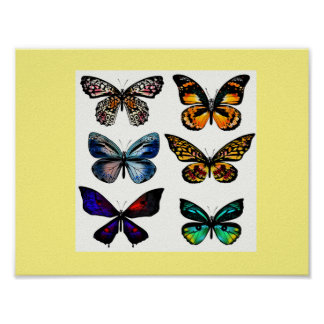 New fresh Butterfly poster / New design