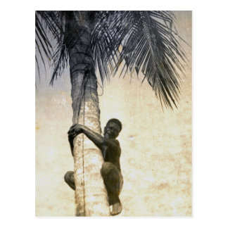 New Guinea native climbs coconut tree Postcard