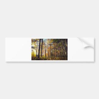 New Hampshire Autumn Forest Bumper Sticker