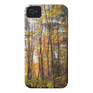 New Hampshire Autumn Forest iPhone 4 Case-Mate Case