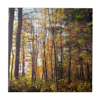 New Hampshire Autumn Forest Tile