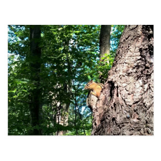 New Hampshire Chipmunk Postcard