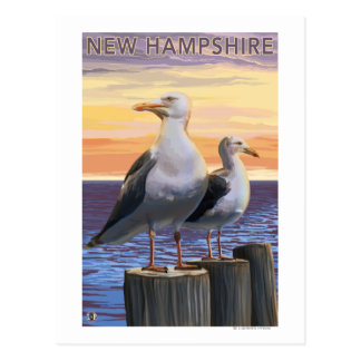 New HampshireSea Gulls Scene Postcard