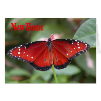 New Home Address Card with Queen Butterfly