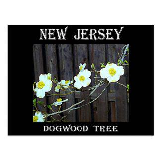 New Jersey Dogwood Postcard