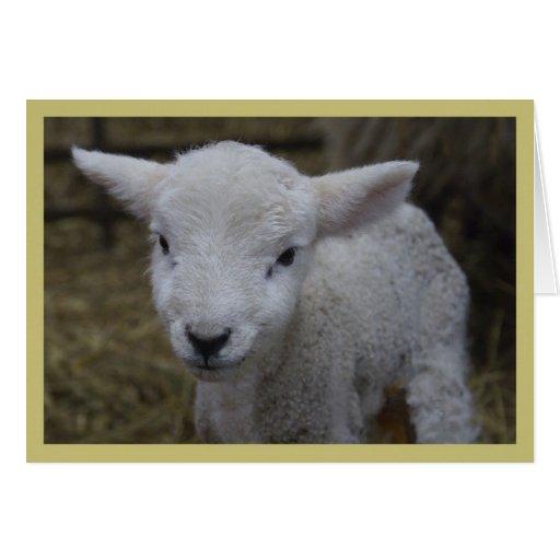 New Lamb Greeting Cards