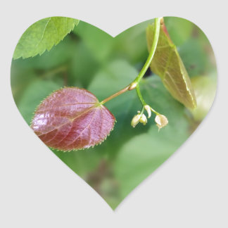 new leaf spring heart sticker