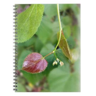 new leaf spring notebook