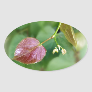 new leaf spring oval sticker