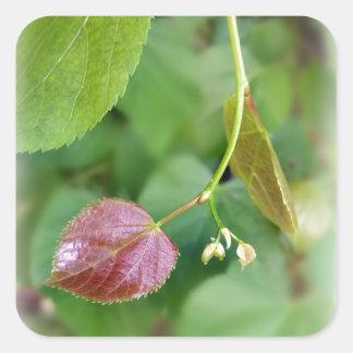 new leaf spring square sticker