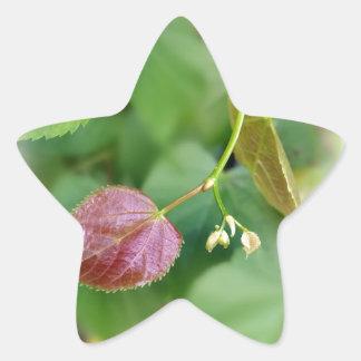 new leaf spring star sticker