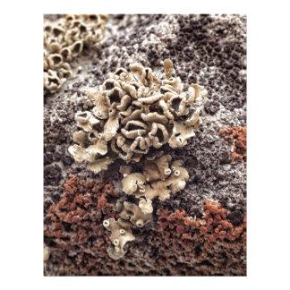 New Mexico Lichen Desert Rock Mossy Orange Letterhead Design