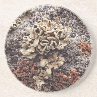 New Mexico Lichen On Desert Rock Coaster