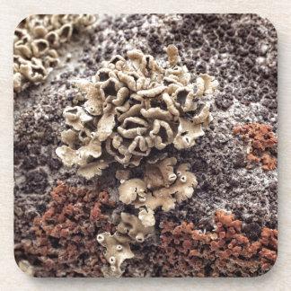 New Mexico Lichen On Desert Rock Drink Coasters