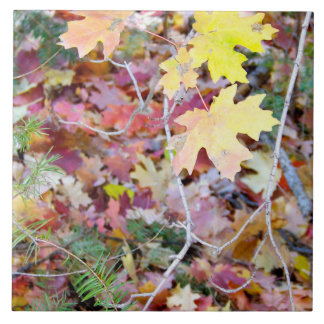 New Mexico Wild Maples Ceramic Photo Tile