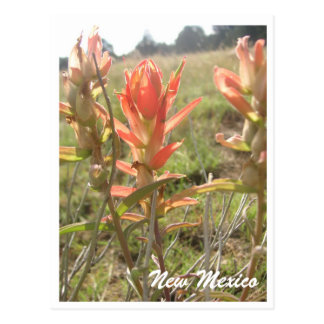 New Mexico Wildflowers Postcard