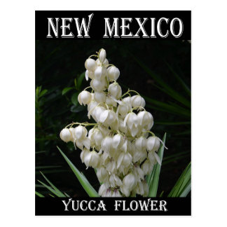 New Mexico Yucca Flower Postcard