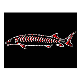 New Native - White Sturgeon Postcard