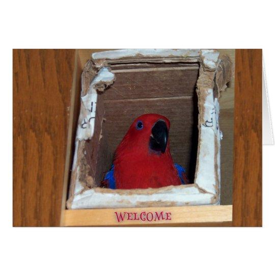 New Nest Card