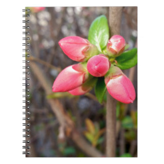 new red buds spiral notebook