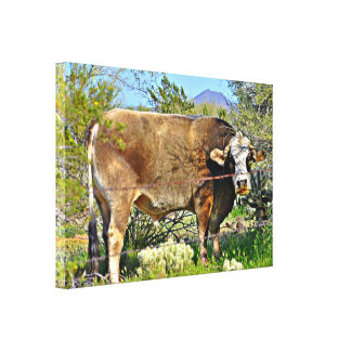 New River Cow Stretched Wall Canvas